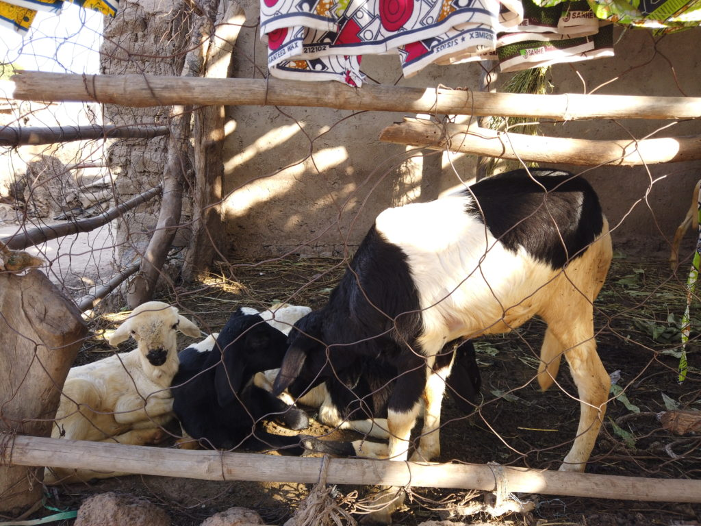 Senegal, Klimaschutz