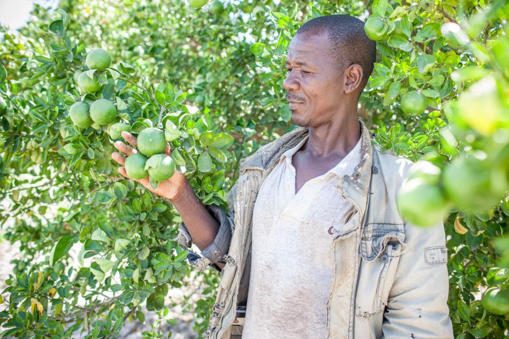 Farmer, Landwirtschaft